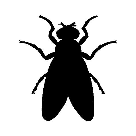 Mosca e Mosquito